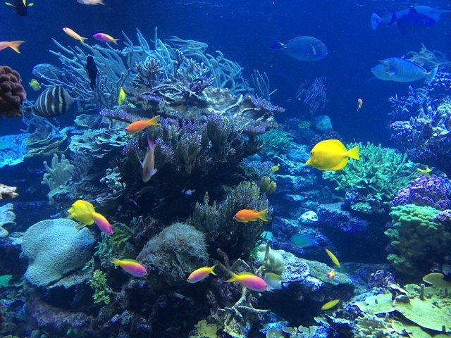 ¿Qué son los ecosistemas marinos?