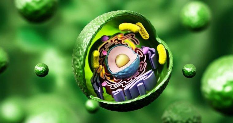 ¿Qué es exactamente la célula animal?