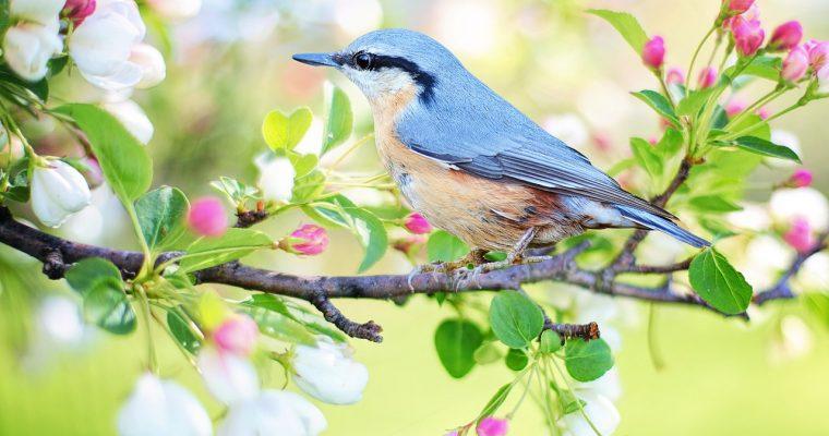 Los animales aéreos más hermosos del mundo