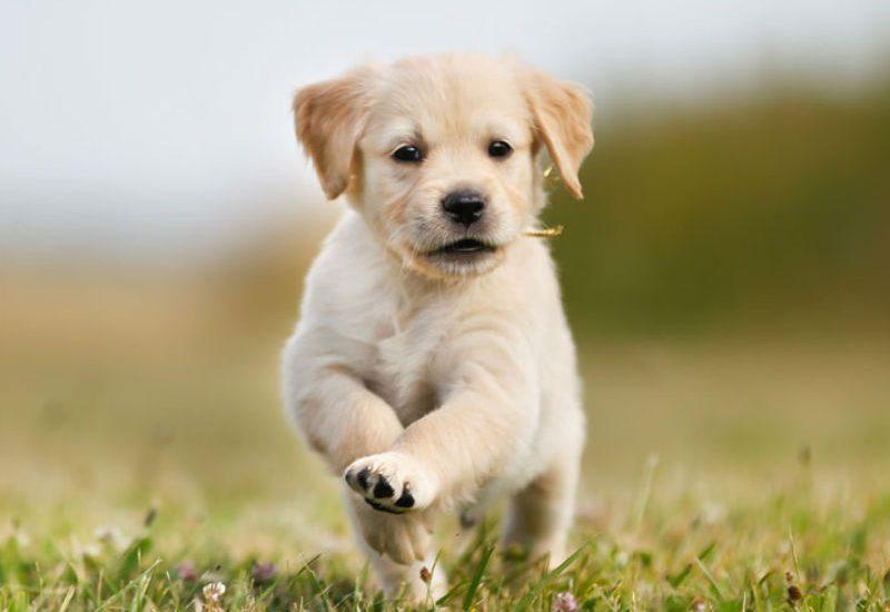 Motivos por los que debes adoptar un perro