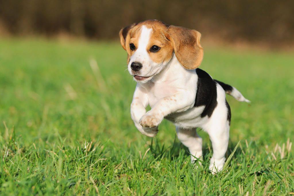 perro animal vertebrado