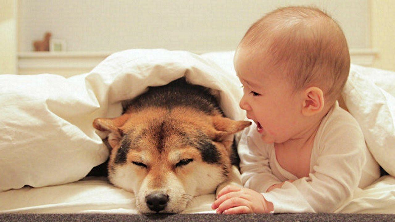 Conoce por qué los perros son buena compañía para los bebés
