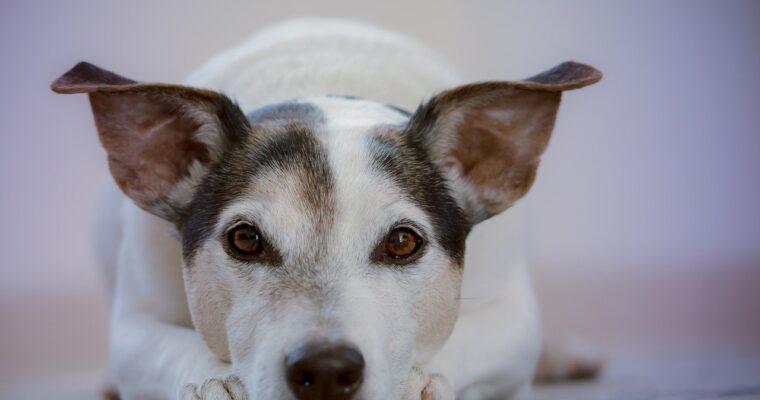 Visión de los perros, ¿sólo ven en blanco y negro?